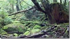 3-10苔むす森