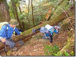 11倒木を通過P1100473