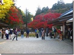 30千如寺の紅葉