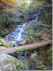 27清賀の滝の丸木橋