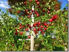 3-19りんご園に立ち寄りました