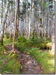 4-04樹林帯を通過します
