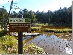 2-03茶水の森、ホソバミズゴケの案内