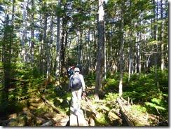 2-04シラビソ林を登っていきます