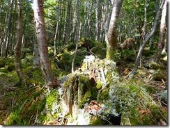 2-07苔の森