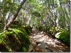2-08石、岩の登山道、歩きにくい