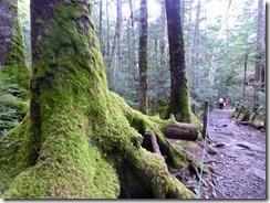 1-07遊歩道は苔の森です