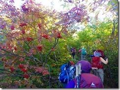 09ナナカマドの実と紅葉